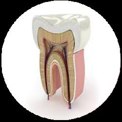 Endodontia Centro Odontológico Higienópolis